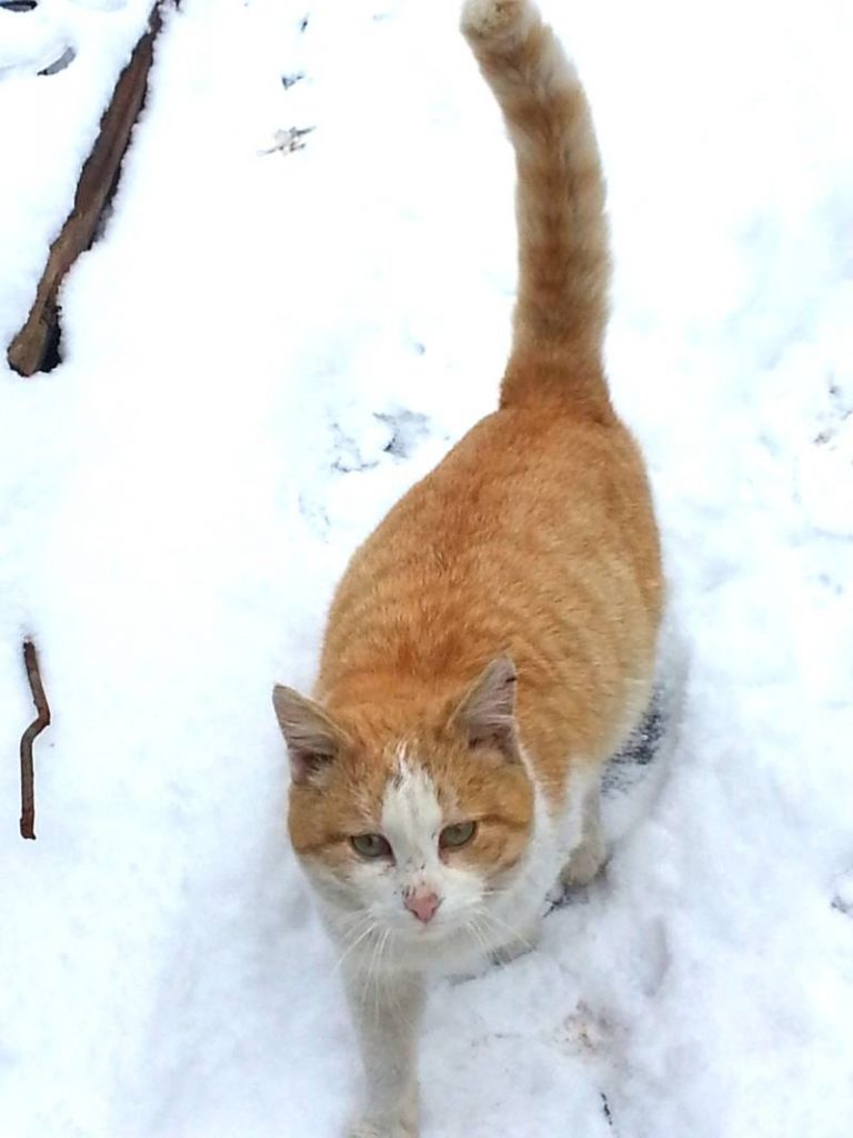 Кот Василий красавец