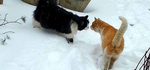 Кошка Дуся и кот Василий