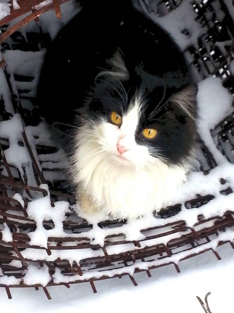 Кошка Дуся на сетке рабице