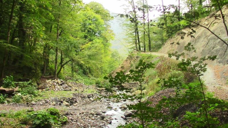 Лес в горах Краснодарского края