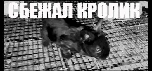 Черный маленький кролик