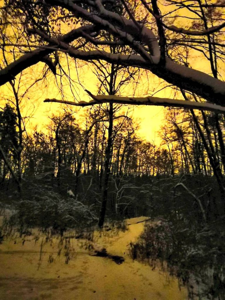 """Лес из сумерек. Фото """"Honor 10"""""""