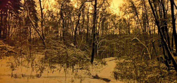 Сумерки зимой Хонор 10